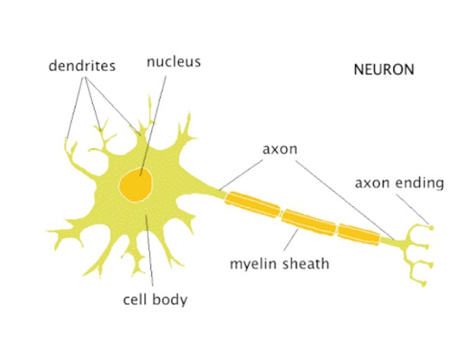 Neuron by Mrs Nich