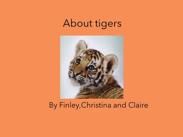 Tigers by Tracey Stewart