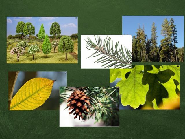 Bomen Groep 4 by Kristel Wildenbeest