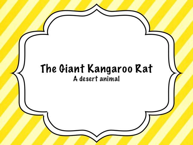 Kangaroo Rat by Amy Clay