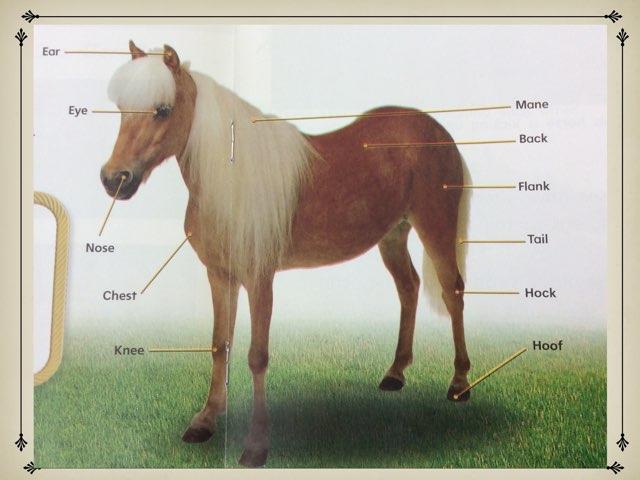 Horse Parts by Chantel Bonner