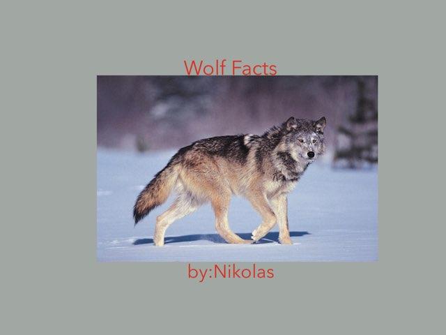 Wolves By Nikolas by Hulstrom 1st Grade