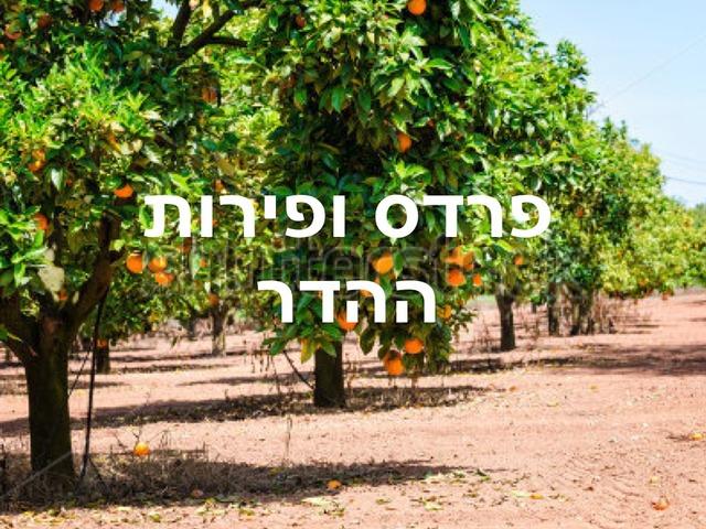 פרדס ופירות ההדר by Shirel Abramovich