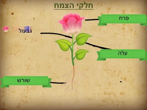 חלקי הצמח by ori sharon