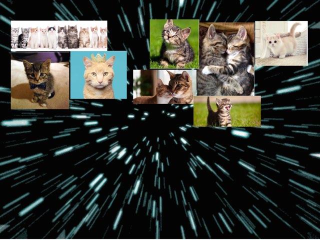 Kittens  by Kim Wildeboer