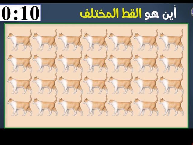 لعبة تحدي by Abeer Dukmaq