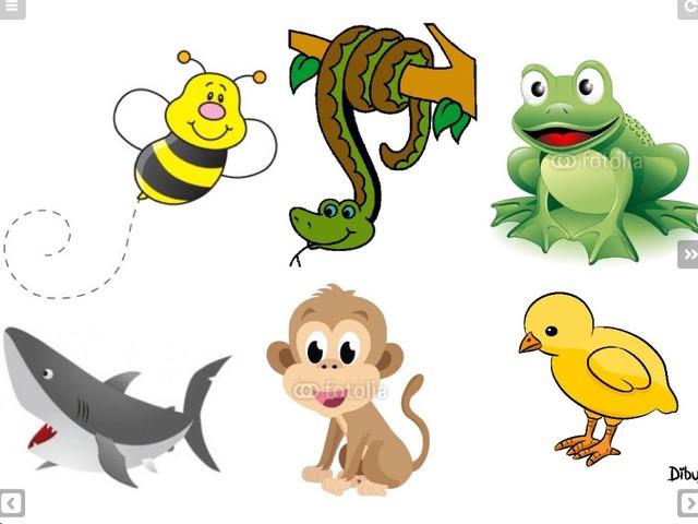Animals  by Marta Edo Monlleó
