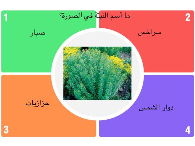 النبتات by omabdullah alenazi