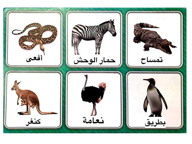 نتعرف على الحيوانات by Hanen Sanallah