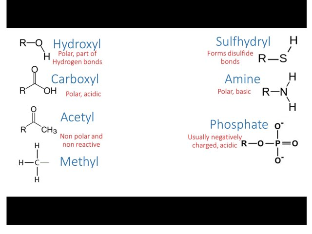 Functional Groups by Sarah Schlussel