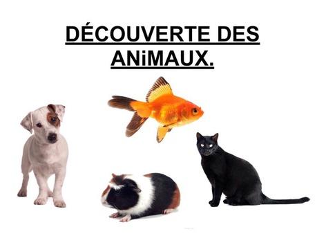 Découverte Des Animaux. by Valerie Escalpade