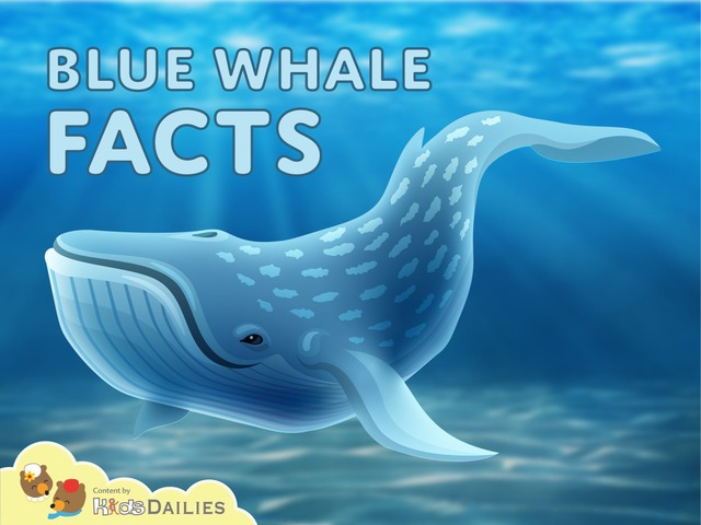 Blue Whale Facts by Kids Dailies