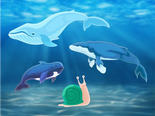Blue Whale Facts by Kids Dailies - Educational Games for