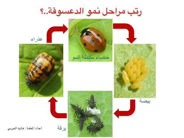الدعسوقة by هانيه الحربى