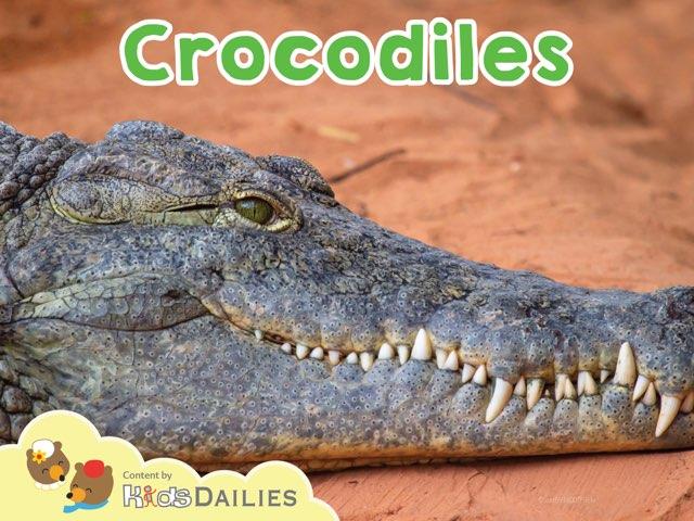 Crocodiles by Kids Dailies