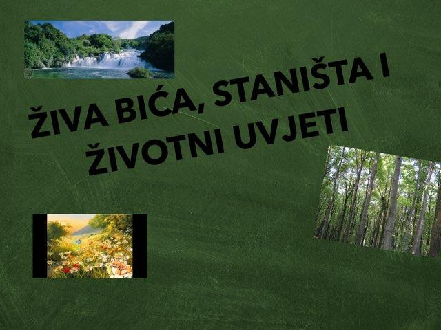Ziva Bica, Stanista I Zivotni Uvjeti  by Sanja Koroman