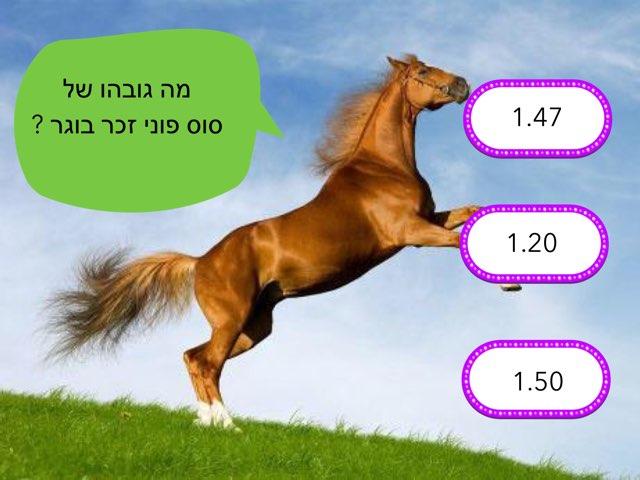 סוסים עטר by בית ספר קישון