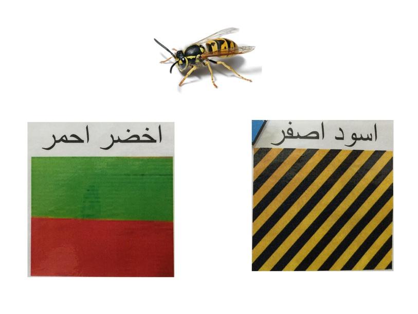 النحلة by sarah abu Reesh