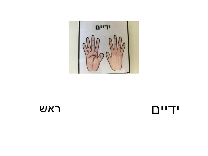 חלקי גוף בעברית by sarah abu Reesh