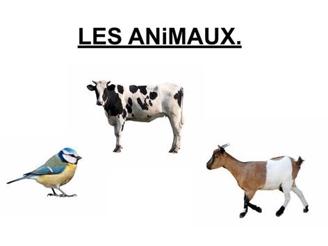Les Animaux Désignation 4. by Valerie Escalpade