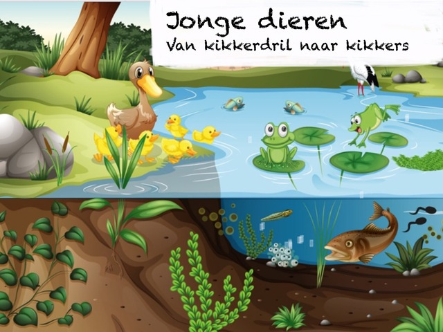 Van Kikkerdril Tot Kikker by Lotte Vaartjes