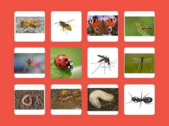 Welk Kriebelbeestje Zie Je?  by Carlijn van Bosheide