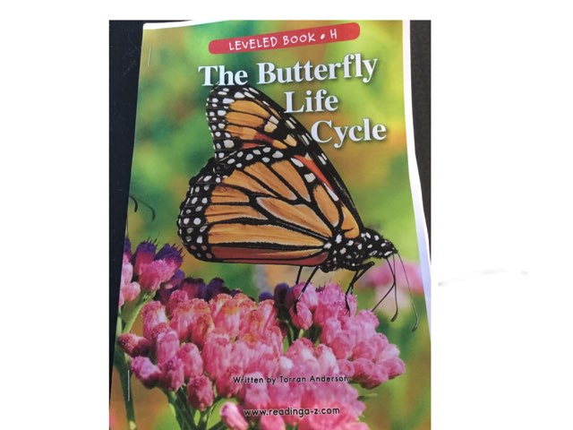 Butterfly Life Cycle by margaret rafle