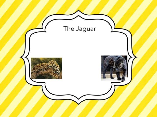 Jacob Paukert by Hulstrom 1st Grade