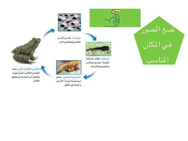 علوم الصف الثالث ابتدائي by علي الزهراني