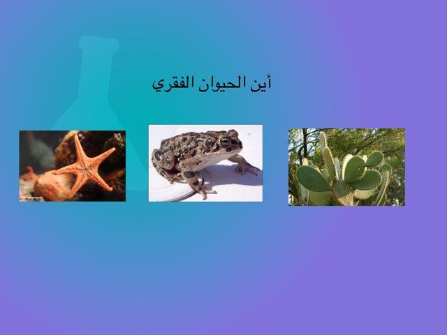 لعبة الحيوانات  by omabdullah alenazi