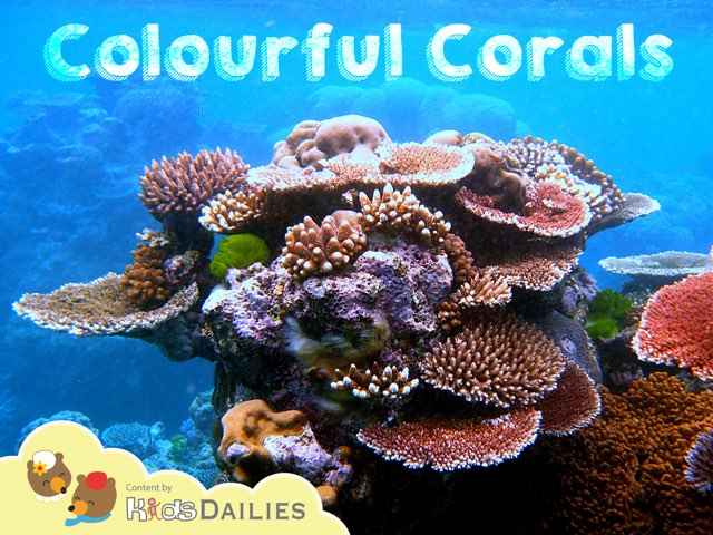 Colourful Corals by Kids Dailies