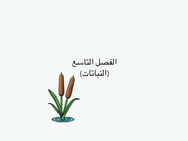 النباتات by jory abdullah
