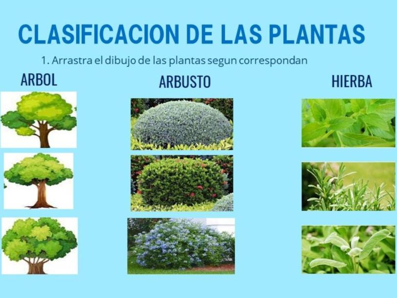 CLASIFICACIÓN DE LAS PLANTAS  by Alexa Ayala
