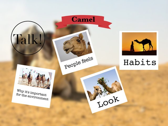Camel by Mahra suliman