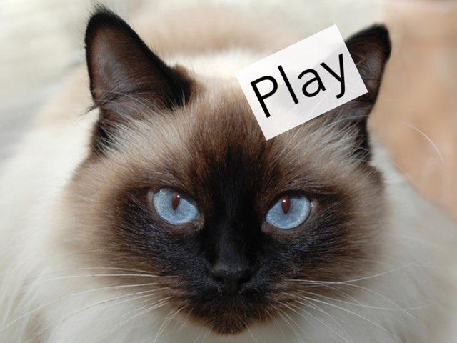 Cat Adventures PT 1 by M3 taylor