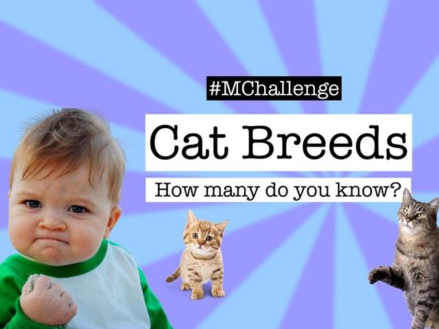 Cat Breeds & memes (#MChallenge) by Nira Skirt