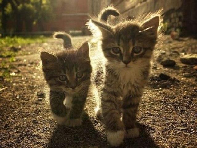 Cat Fun by Jazzi Burbeck