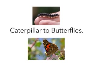 Caterpillar to Butterfly1 by Room 207