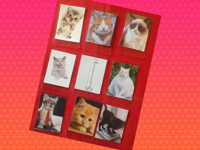 Cats by Barbi Bujtas