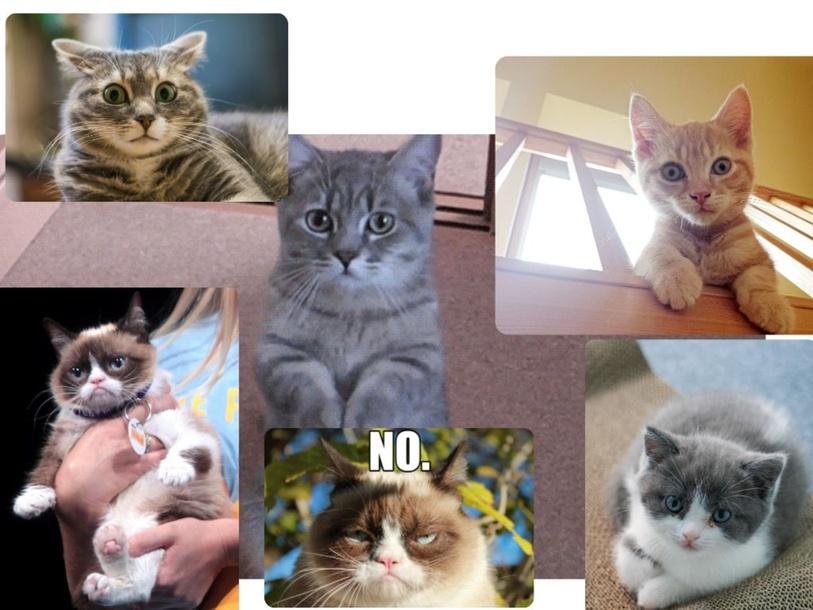 Cats by Lucio Fan