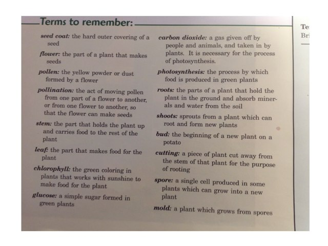 Chapter 2 Vocabulary Practice by Susan Borland