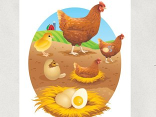 Chicken Life Cycle by Academic Tech