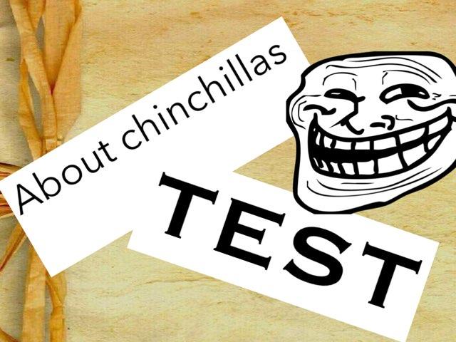 Chinchillas by Jane Miller _ Staff - FuquayVarinaE