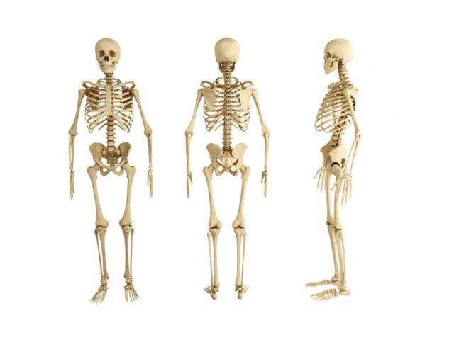 Cldv Esqueleto Humano by Mónica C G
