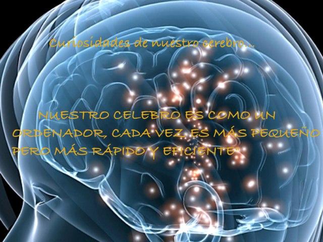 Cmc(Funcionamineto De Nuestro Cerebro) by Rose Morant