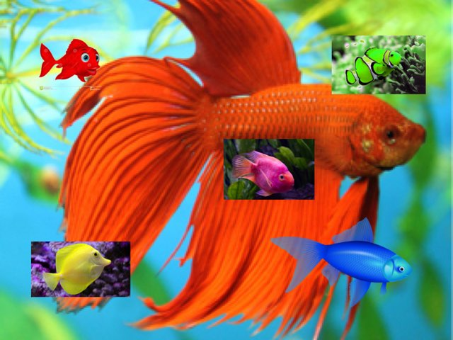Collin's Fish Colors by Sheila Bowman