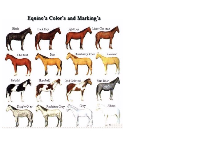 Colours Of The Horse by Horsey lover  2006