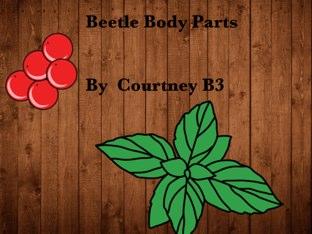 Courtney's Beetle Project by Vv Henneberg