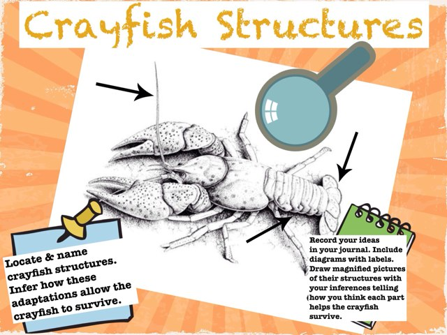 Crayfish Structures by Folly Teach