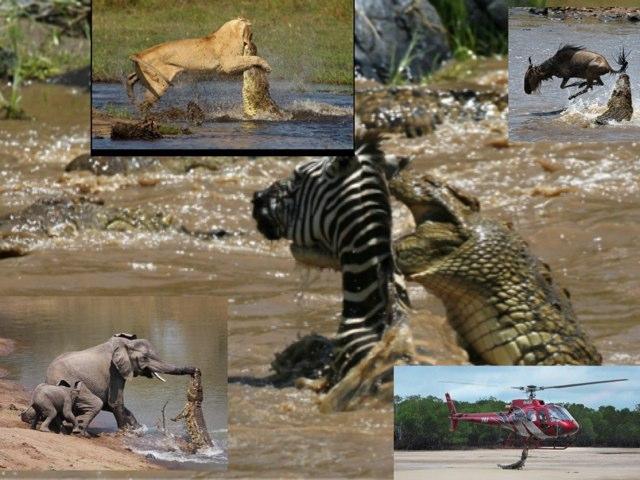 Crocodile Attack by mcpake family